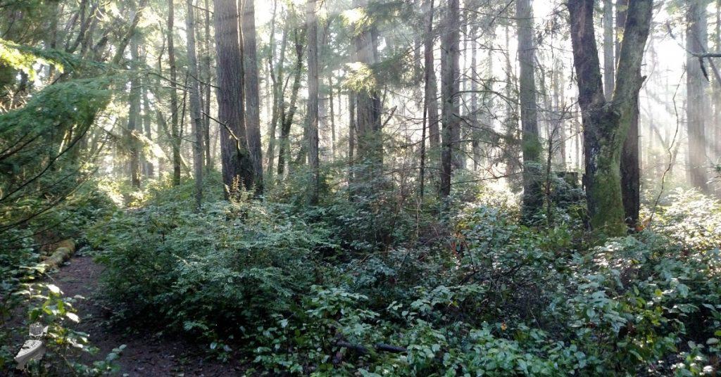 Old Hiking Trail