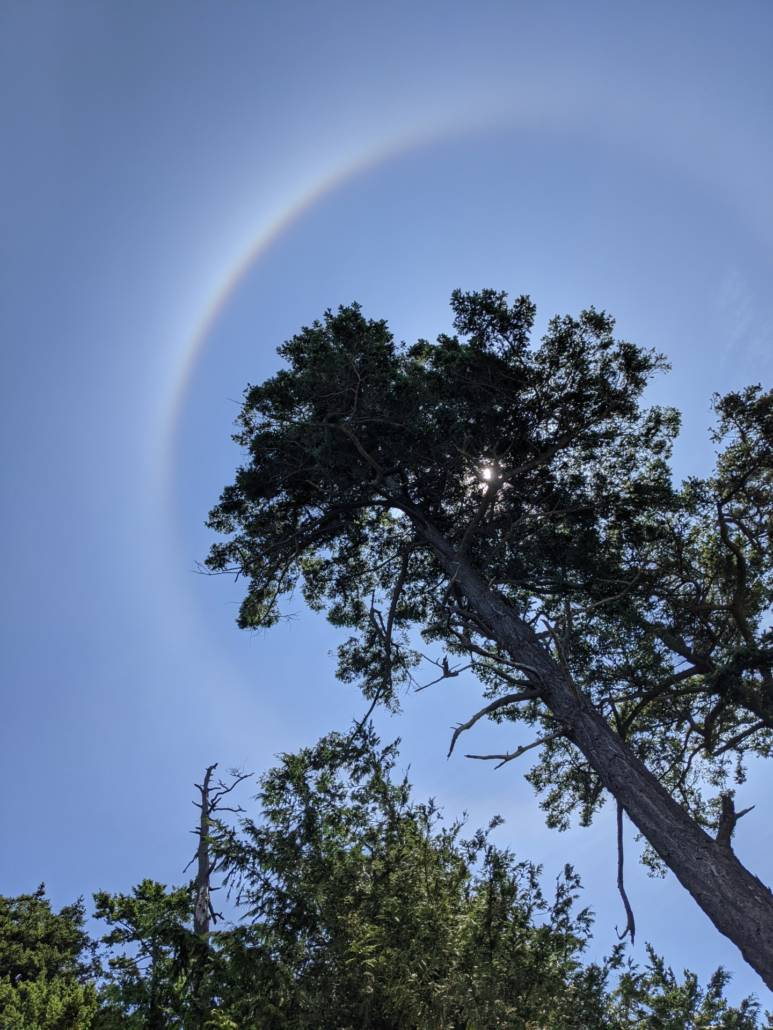 Looking up at a tree with a rainbow halo around it.